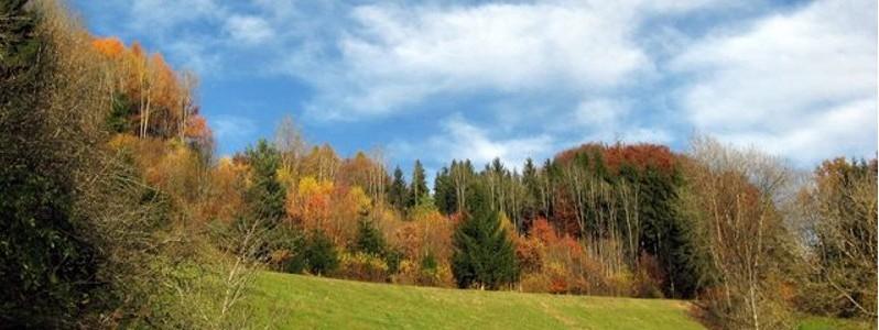 Bayerischer Wald im Herbst