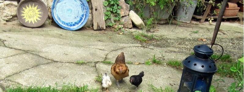 Künstlerische Keramik und Hühner in Eintracht