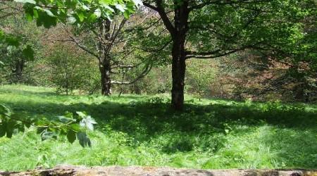 gleich am Anfang eine kleine Wiese mitten im Wald