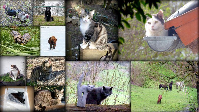 Tiere am Wolfenhaus