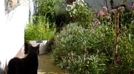 Diego im Garten