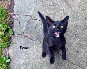 Kater Diego
