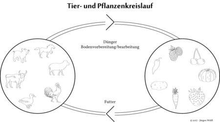 Tier und Pflanzenkreislauf
